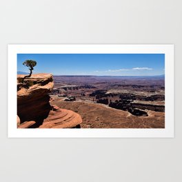 Tree Overlooking the Canyonlands Art Print