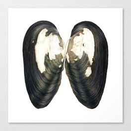 Thick Shelled River Mussel (Unio crassus) Canvas Print