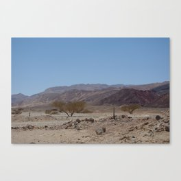 Peace in the desert Canvas Print