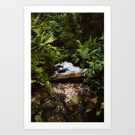 THE RAINFOREST II Art Print