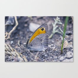 You can't hide Canvas Print