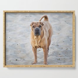 Shar Pei dog standing on the beach Serving Tray