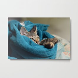 Arabela, the cat. Metal Print