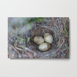 Horned lark nest and eggs - Yellowstone National Park Metal Print