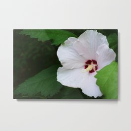 Tiny Flower, Big Beauty Metal Print