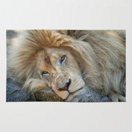 Resting White Lion Rug