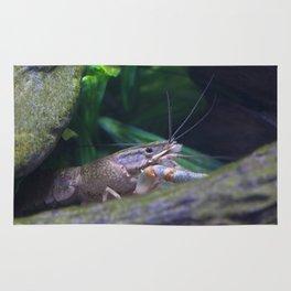 The crayfish Rug