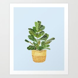 Fiddle Leaf Fig in a Basket- Ficus Lyrata Art Print