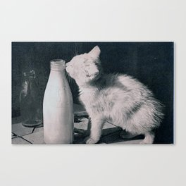 cat's milk Canvas Print