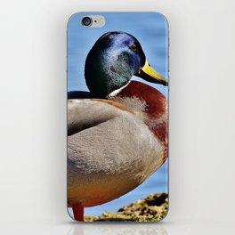 Mallard iPhone Skin