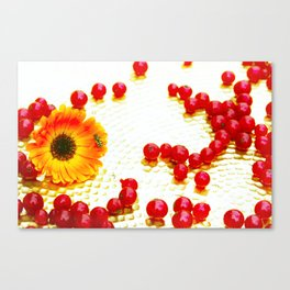 Visitor on a golden plate Canvas Print