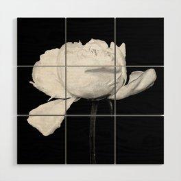 White Peony Black Background Wood Wall Art