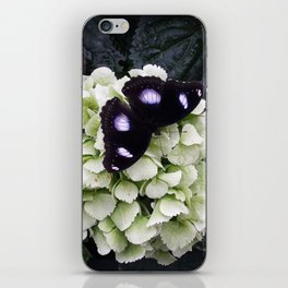 Black Butterfy iPhone Skin
