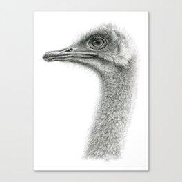 Cute Ostrich Profile SK054 Canvas Print