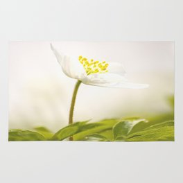 Wood Anemone Blooming in Forest Rug