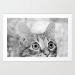 What's New KittyCat Art Print