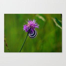 Snailhouse on a Flower Canvas Print