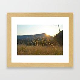 wheat grass  Framed Art Print