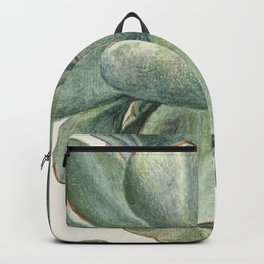 Herman Saftleven - Succulent (probably a Cotyledon orbiculata) - 1683 Backpack