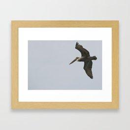 Pelican on fly Framed Art Print