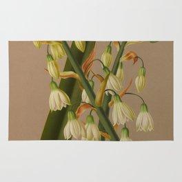 Aendsen, Arentine H. (1836-1915) - Haarlem's Flora 1872 - Hyacinthus Candicans Rug