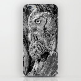 Echo the Screech Owl by Teresa Thompson iPhone Skin