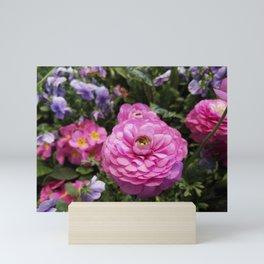 Spring Rosy Ranunculus And Primrose With Violet Violas Mini Art Print