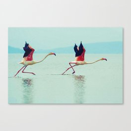 Pink Winged Flamingos taking off Canvas Print