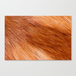 Red fox hairy fur texture cloth Canvas Print
