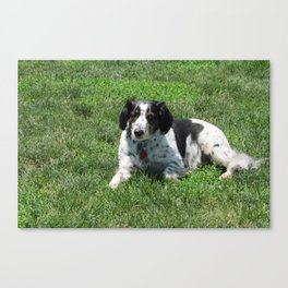 Skeeter Canvas Print