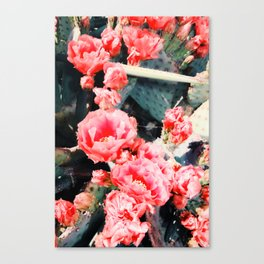 closeup blooming red cactus flower texture background Canvas Print