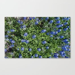 Stepping Out In Blue Canvas Print