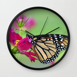 Monarch Butterfly Pollinating Deep Pink Cosmos Flower Wall Clock