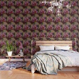 Sunkissed Pink Iris Wallpaper