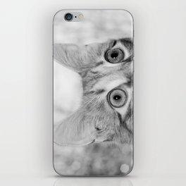 What's New KittyCat iPhone Skin