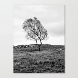 The tree and the crow Canvas Print