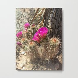 Desert Flower Metal Print