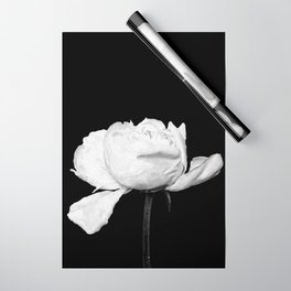 White Peony Black Background Wrapping Paper