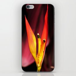 Tropical Blooms in Costa Rica iPhone Skin