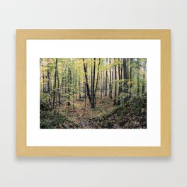Fall Forest Framed Art Print