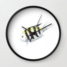 Sergeant Major (Píntano) Wall Clock