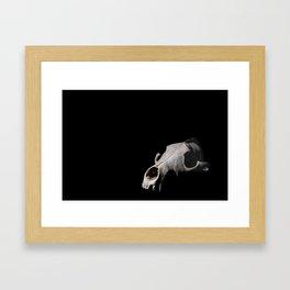 Coyote Skull Framed Art Print
