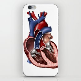 Cross section of human heart. iPhone Skin