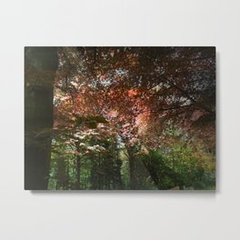 Autumn Beeches Metal Print