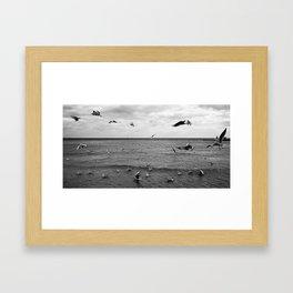 Bird Storm Framed Art Print