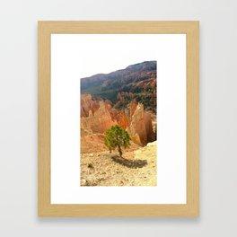 Bryce Canyon Tree Framed Art Print