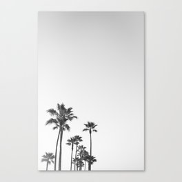 Black and White California Pal...