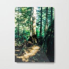 Alaskan Forest #1 Metal Print