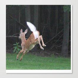 Deer Pillow Canvas Print
