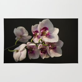 Orchid Branch Rug